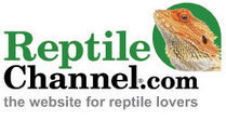 Frog Reptiles | Learning About Frogs | Scoop.it