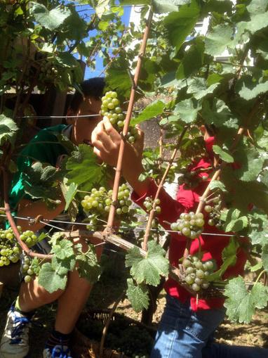 Mondes du vin | Le vin d'Issy et les enfants dans les vignes | World Wine Web | Scoop.it