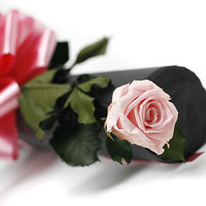 Preserved pink rose | Flowers for delivery in United Kingdom | Scoop.it