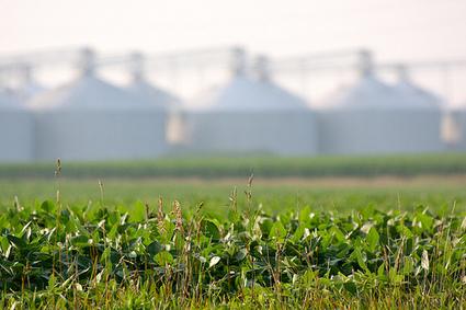 Les OGM, bientôt subventionnés au nom de la lutte contre le ... - Basta ! | Abeilles, intoxications et informations | Scoop.it