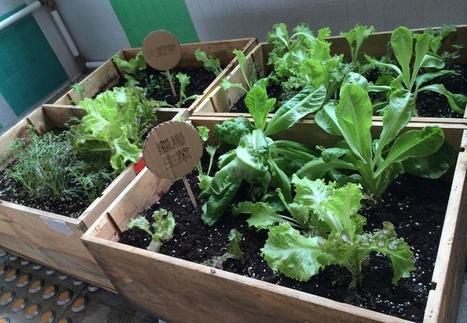 Cómo empezar el huerto urbano de tus sueños | Agroindustria Sostenible | Scoop.it