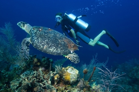 Top 5 Places to Scuba Dive with Sea Turtles | All about water, the oceans, environmental issues | Scoop.it