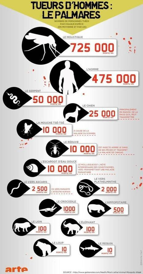 [infographie] Le moustique, l'animal le plus dangereux | Toxique, soyons vigilant ! | Scoop.it