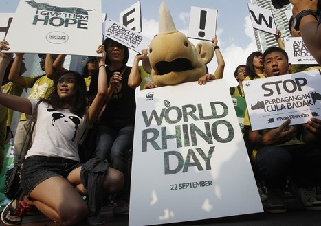More rhinos killed this year than ever before | NGOs in Human Rights, Peace and Development | Scoop.it