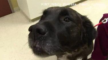 Son chien découvre son cancer! | CaniCatNews-actualité | Scoop.it