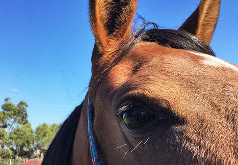 Australian trainer suspended over dumping of dead horses | Ultimate Horsemanship | Scoop.it