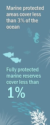 #Island #Biodiversity ~ #Isolatedislands can be essential #sanctuaries  #MarineReservesCoalition | Rescue our Ocean's & it's species from Man's Pollution! | Scoop.it