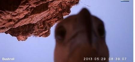 ATTENTION, LE P'TIT OISEAU VA SORTIR – Un aigle chipe une caméra, et se filme avec | Jean Armand | Scoop.it