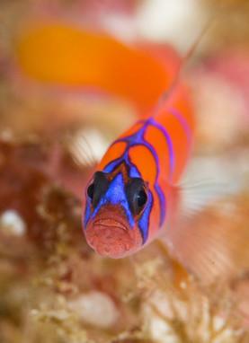 Creative Underwater Photography; backlighting, panning, rear curtain sync|Underwater Photography Guide | Indigo Scuba | Scoop.it