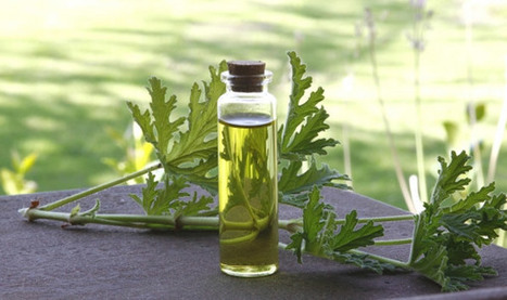 What Are Essential Oils & Why Do You Need Them?   Home Remedies   Scoop.it