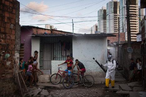Zika Virus Requires an Urgent Response - NY Times | Virology News | Scoop.it