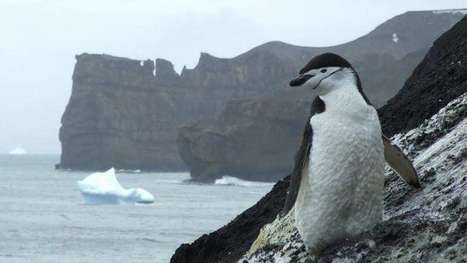 Northern invaders threaten Antarctic marine life | Sustain Our Earth | Scoop.it