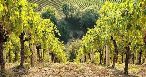 Les vins « durables » italiens ont leur logo | mon-ViTi | Me, myself & wine | Scoop.it