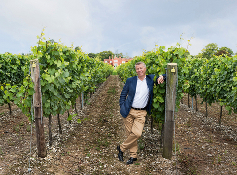 Gusbourne, Hambledon, Chapel Down...English sparking wine's new fizz | Vitabella Wine Daily Gossip | Scoop.it