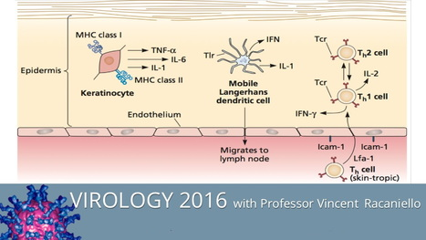 Virology Lectures 2016 [21 hours of Video Lectures] | University-Lectures-Online | Scoop.it