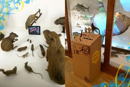 Museomix au Museum d'Histoire Naturelle | Museomix - Web & talk review | Scoop.it