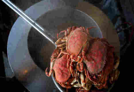 Why A Neurotoxin Is Closing Crab Season In California | Food for Foodies | Scoop.it