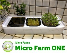 From Countertop to Classroom | Vertical Farm - Food Factory | Scoop.it