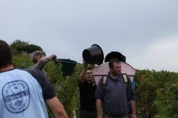 Loire 2013 harvest 'difficult and complicated' | Autour du vin | Scoop.it