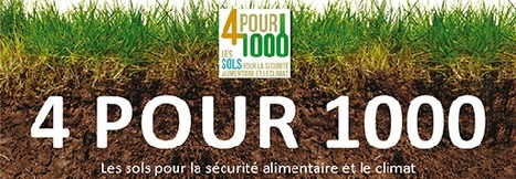 Le Projet 4 pour 1000 dans les vignes. | Vos Clés de la Cave | Scoop.it