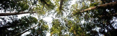 Apports de l'investissement dans un groupement forestier | Placements financiers | Scoop.it