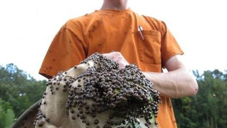 UNAM crea método para reciclar desechos orgánicos con insectos | Legislación científica | Scoop.it