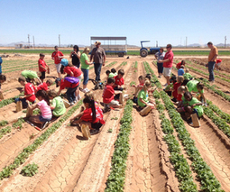 UA program offers kids 'Agriculture Disneyland' | InMaricopa | CALS in the News | Scoop.it