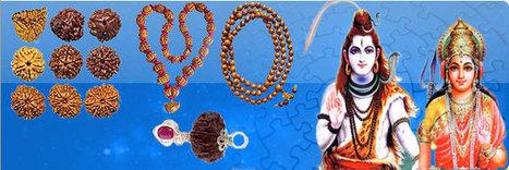 Rudraksha | Siyar Singhi | Hatha Jodi | Astrology | Scoop.it