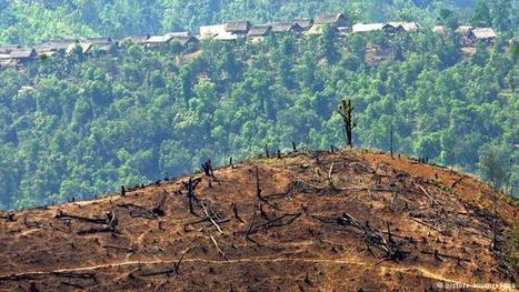 Deforestation in Myanmar threatens biodiversity and communities | The Blog's Revue by OlivierSC | Scoop.it