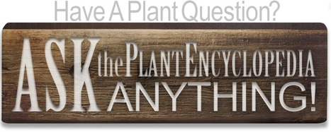 A creative commons plant encyclopedia. | My Garden | Scoop.it