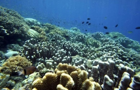 Les récifs coralliens : qui sont-ils ? que risquent-ils ? | Biodiversité | Scoop.it