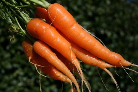 Unique compound in carrots reduces cancer risk - Underground Health | Food in America | Scoop.it