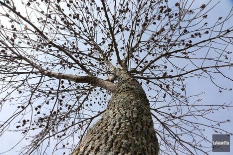 Insectes ravageurs : les prochaines invasions | arts premiers | Scoop.it