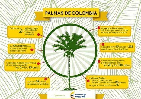Cuidar el agua es cuidar nuestra flora. Conoce el plan de uso y conservación de la palma   Agua   Scoop.it