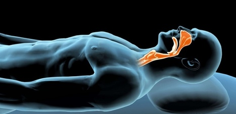 Ronflements et apnées du sommeil : découverte de nouvelles fibres musculaires | DORMIR…le journal de l'insomnie | Scoop.it
