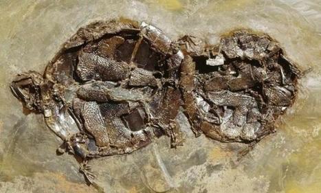 Tortugas abrazadas 47 millones de años | Agua | Scoop.it