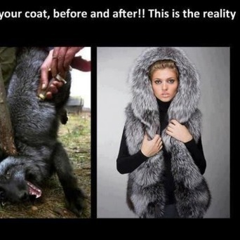 Animal Fur Harvested in Blood, Agony, and Death   GarryRogers NatCon News   Scoop.it