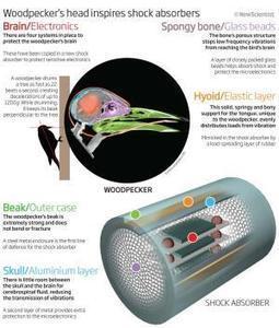 Woodpecker's head inspires shock absorbers - tech - 04 February 2011 - New Scientist#.UyKCc0l-_IU | Interests | Scoop.it
