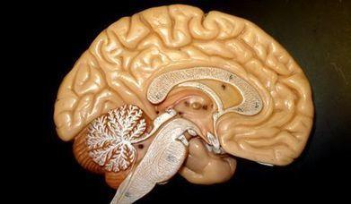Une méthode innovante pour étudier le cerveau humain | Neurosciences, la science qui avance | Scoop.it