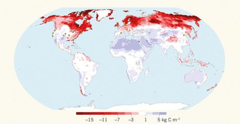 Biogeochemistry: Projections of the soil-carbon deficit : Nature | Curriculum Resources | Scoop.it