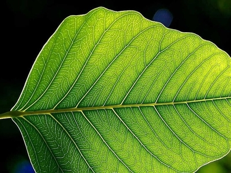 Could Plants Be Used as Sensors? > ENGINEERING.com   Gardening is more than Digging the Dirt   Scoop.it
