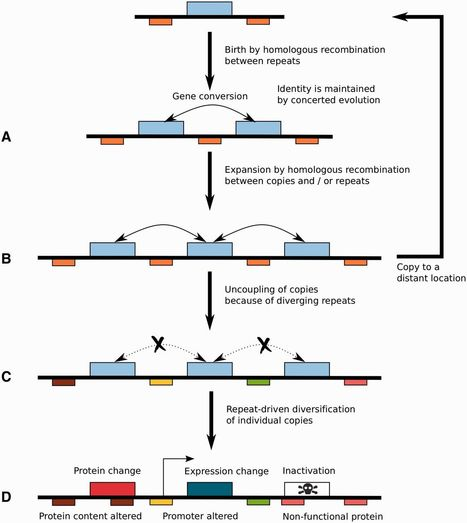 Genome Biology and Evolution: A Tale of Genome Compartmentalization: The Evolution of Virulence Clusters in Smut Fungi (2016) | Plant Pathogenomics | Scoop.it