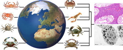 Journal of Invertebrate Pathology | Special Issue, (June, 2012) | Diseases in Aquatic Crustaceans: Problems and Solutions for Global Food Security | Aquaculture Directory | Scoop.it