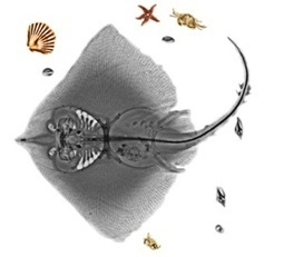 Coloured X-rays of animals and plants - in pictures   Le Grenier d'Elise   Scoop.it