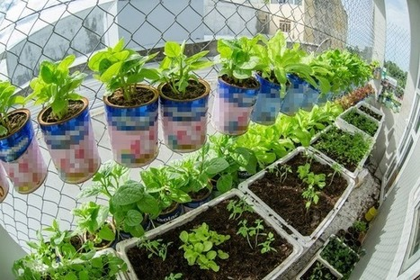 Trồng rau xanh bằng những hộp sữa bỏ không ,món ăn ngon | tin tức tổng hợp 24h | Scoop.it