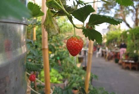 L'appétit croissant pour l'agriculture urbaine | Agriculture urbaine et rooftop | Scoop.it
