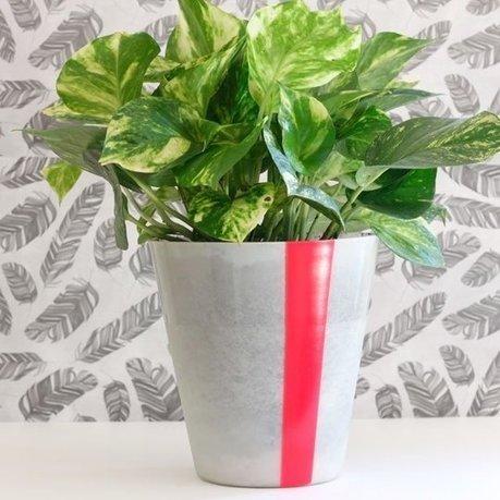 The Top 10 Indoor Gardening Tips For You - Howlerband.com | Home & Garden | Scoop.it