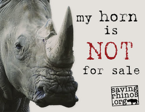 Concern Grows Around Role of Rhino Horn 'Suppliers' in South Africa | Rhino Horn is NOT Medicine | What's Happening to Africa's Rhino? | Scoop.it