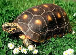 Tortugas de tierra dentro de la casa: alojamiento y sustrato : TiendAnimal | Noticias Animales [Pet news] | Scoop.it