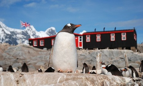 Think penguins are cute? These bad eggs need an Antarctic Asbo: CHRISTOPHER STEVENS reviews last night's TV | Antarctica | Scoop.it